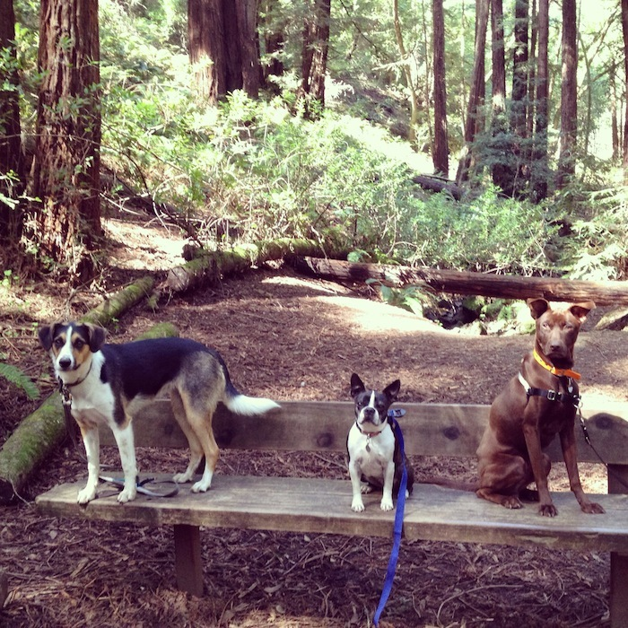 Redwood_regional_dogs